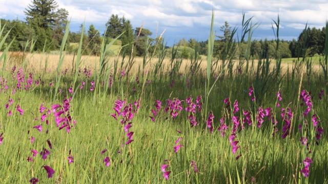 Artenschutz Artenschutz im Landkreis Starnberg