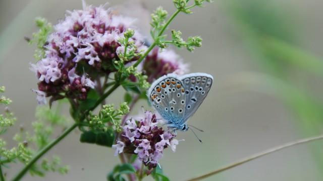 Insektensterben Insektensterben