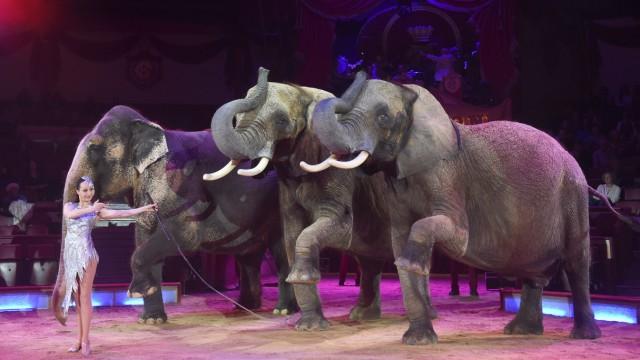Elefanten im Circus Krone Bau in München