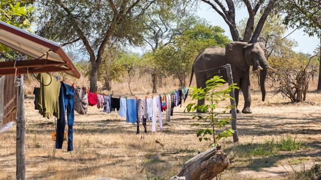 Elefant in Dorf