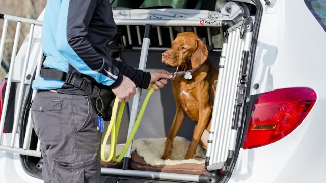 Haustiere fahren am sichersten in einer Box im Auto mit