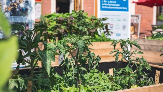 Urban gardening Pasing
