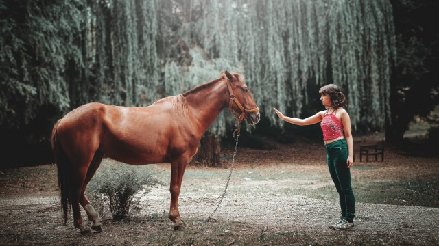 Pferd und Mädchen