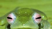 Neue Froscharten in Madagaskar entdeckt, dpa