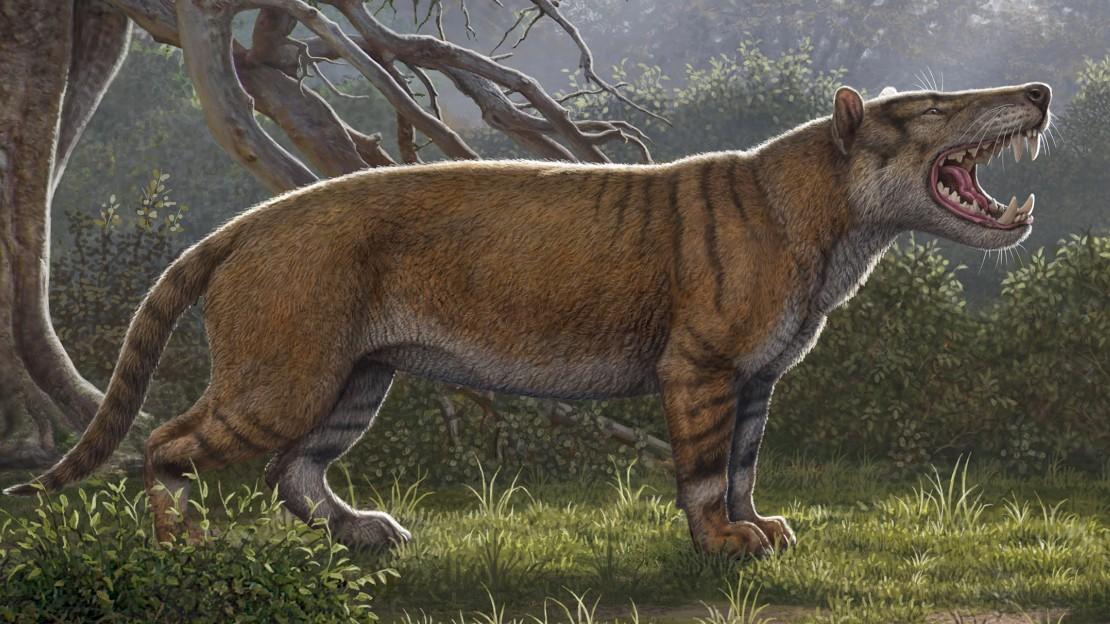 Paläontologie - Riesiger Raubsäuger in Kenia entdeckt