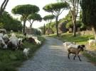 Via Appia Rom Fotolia_223687952_S