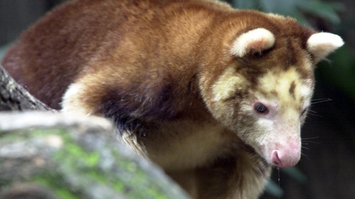Brauchen wir einen globalen Pakt zum Artenschutz?