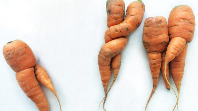 Odd shaped carrots on white cardboard background