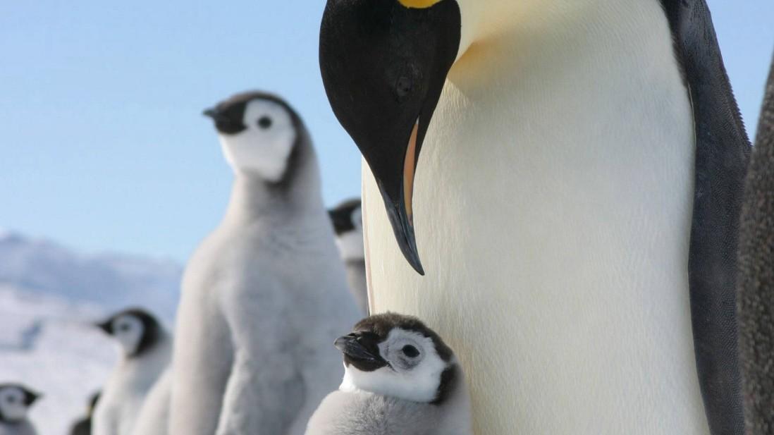 Pinguine auf der Flucht