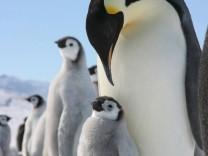 28. Internationale Antarktiskonferenz beginnt in Bremen