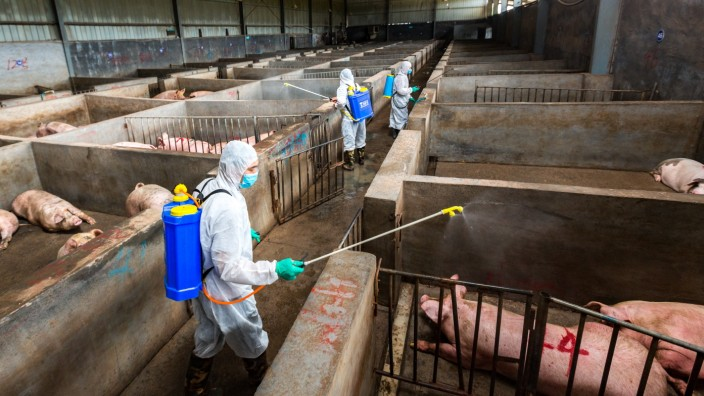China Responds To Outbreak Of African Swine Fever
