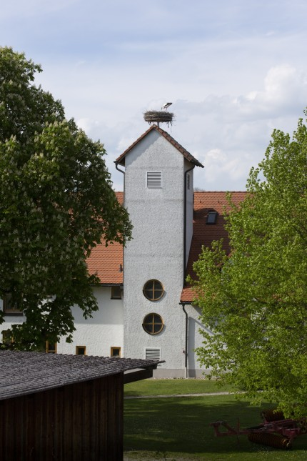 Weißstorch - Ciconia ciconia in Kottgeisering
