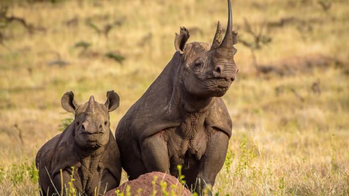 Boundless Southern Africa auf der ITB 2018