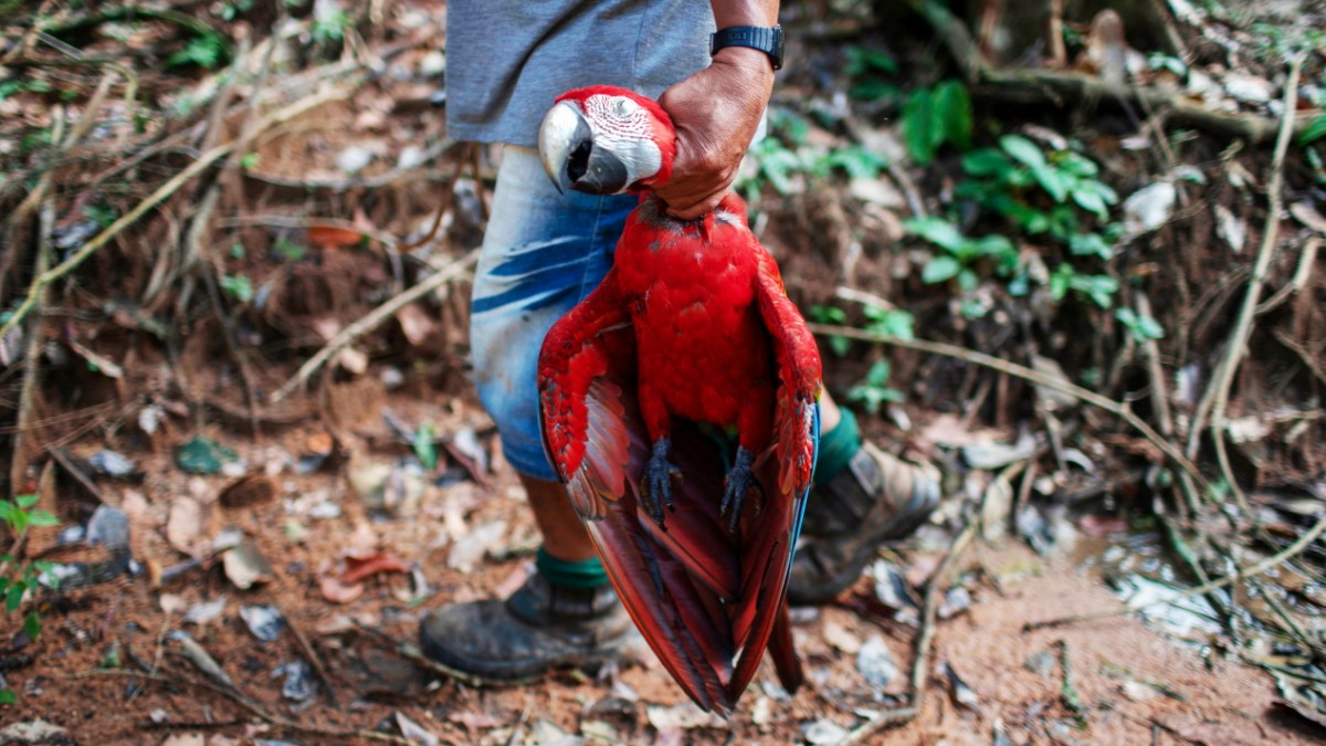 Artensterben - Der Mensch verdrängt eine Million Arten