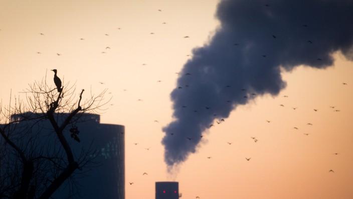 Umweltschützer:Deutschland überzieht Ressourcen-Budget