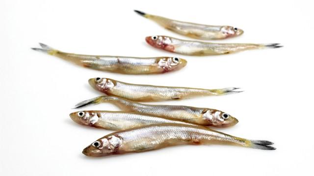 Biologie Fischerei