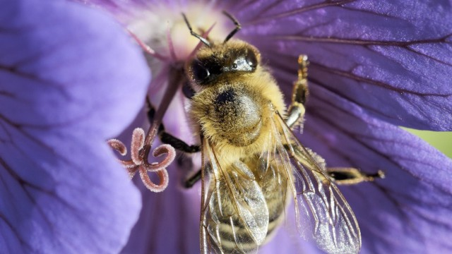 Umwelt und Naturschutz in Bayern Artenschutz in der Stadt