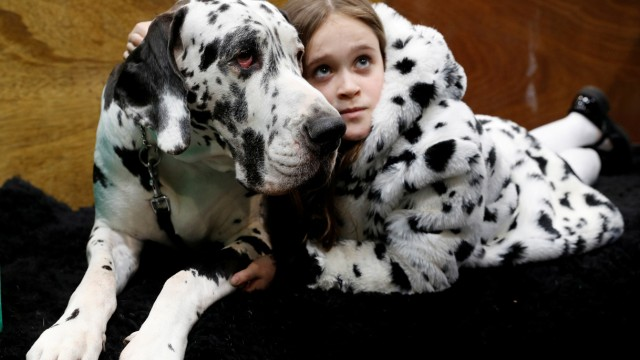 Claudia Kelleway lies with Ruby the Great Dane during the first day of the Crufts Dog Show in Birmingham