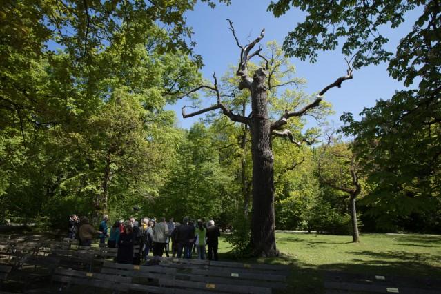 Projekt Eremiten im Klosterwald Maria Eich der Allianz zum Schutz des Klosterwaldes wird als offizielles Projekt der UN-Dekade Biologische VielfaltâÄœausgezeichnet