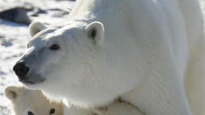 Klima Gefahr Klimawandel