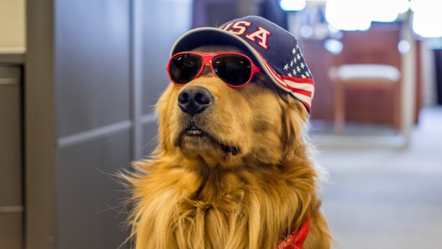 """Wag Brigade - """"Streichelhunde"""" Flughafen San Francisco"""