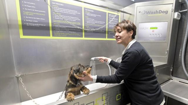 Haustiere Haustiere