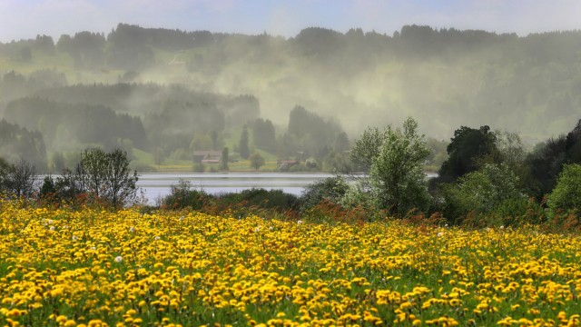 Start elektronisches Polleninformationsnetzwerk