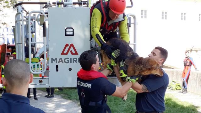 Hund aus der Isar gerettet: Feuerwehr im Einsatz