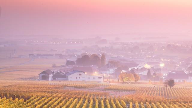Misty sunrise over vineyards in autumn, Oger, Champagne, France