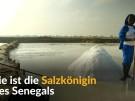Salzkönigin des Senegals (Vorschaubild)