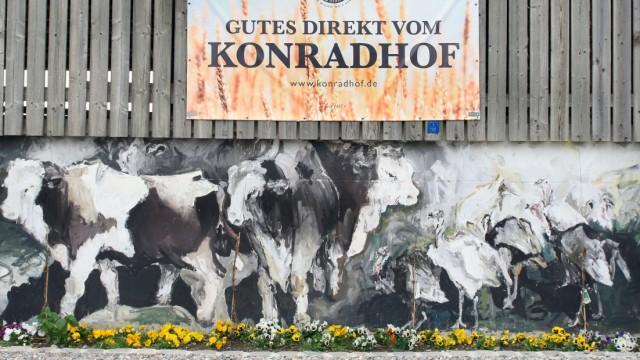 Bullenmast auf dem Konradhof