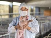 schweinegrippe schneider