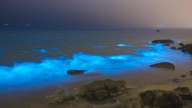 Algae outbreak turns Fuzhou shoreline glowing blue