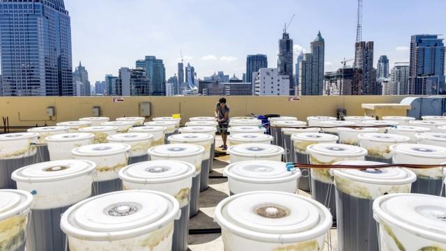 Rooftop Production of Spirulina in Bangkok