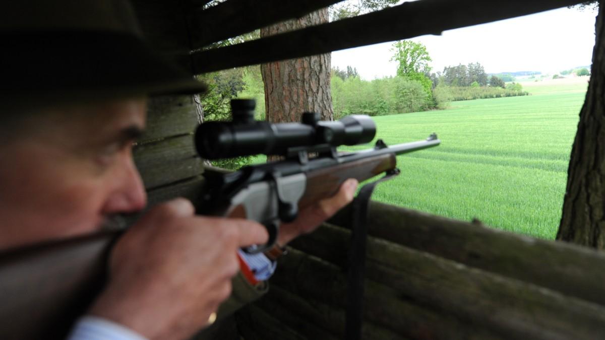 Wenn Aiwanger vorhat, einen Bock zu schießen