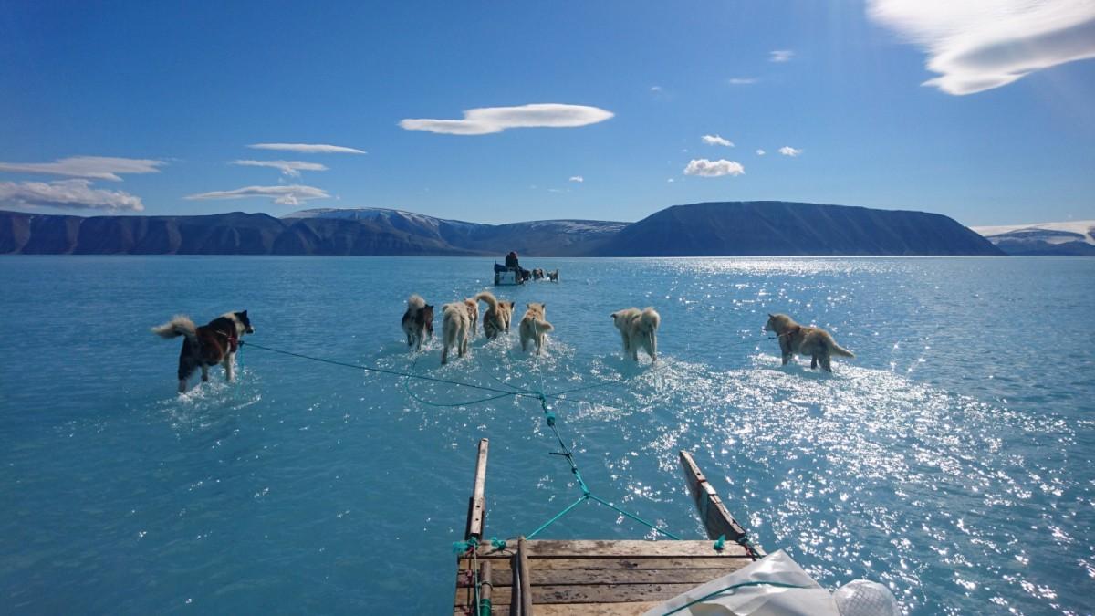 Wenn Hunde über Wasser laufen