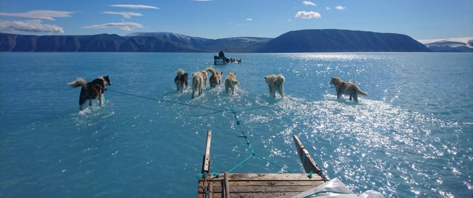 Schlittenhunden auf dem Grönlandeis