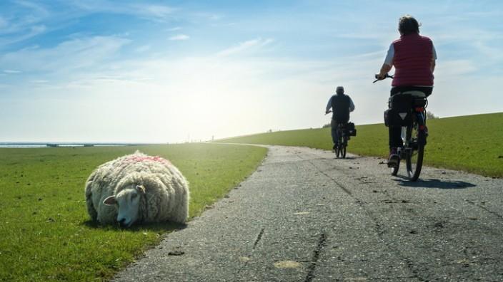 Radreise Radtour Radfernweg Radtouren Fahrrad Schaf Meer