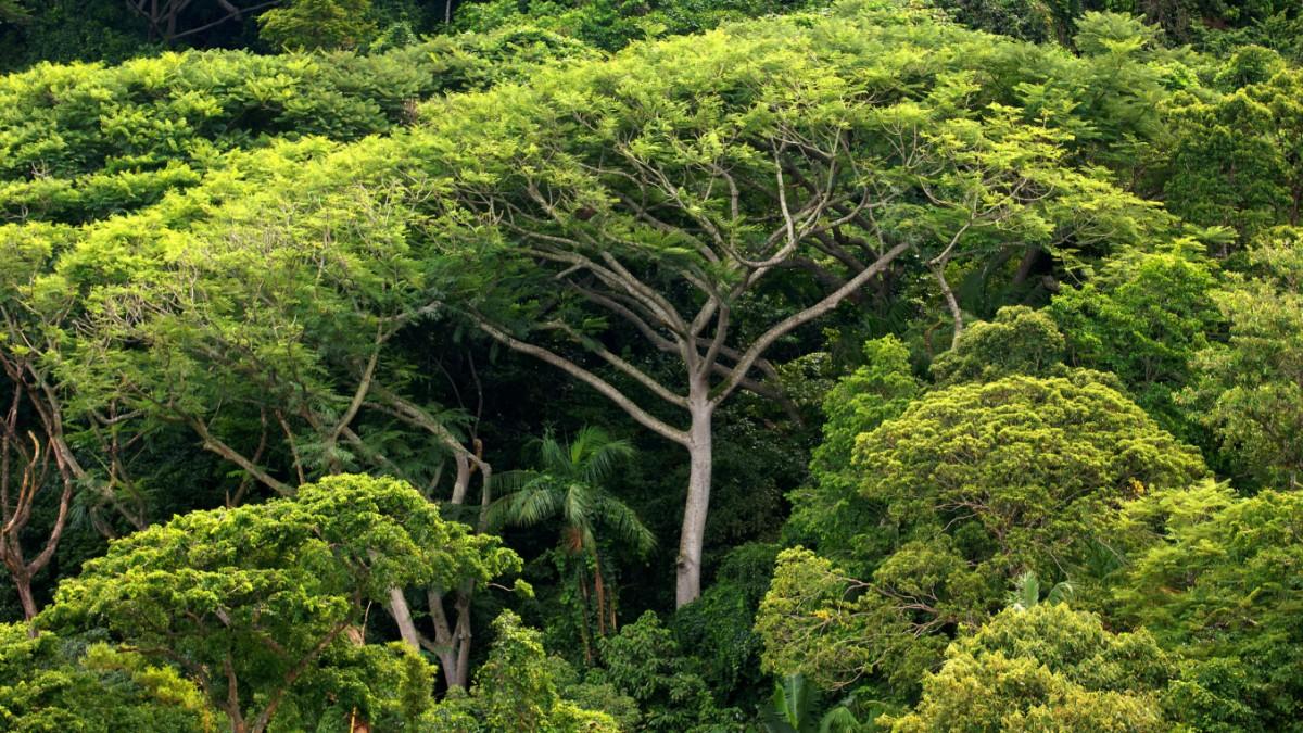 Lasst uns Milliarden Bäume pflanzen