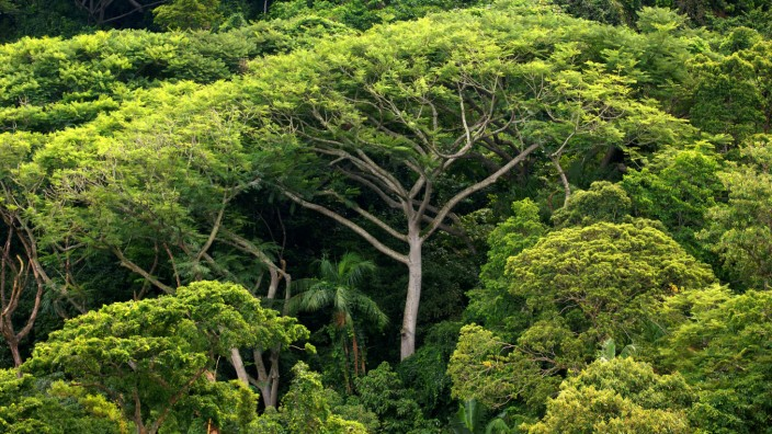 Study: Trees can save the climate