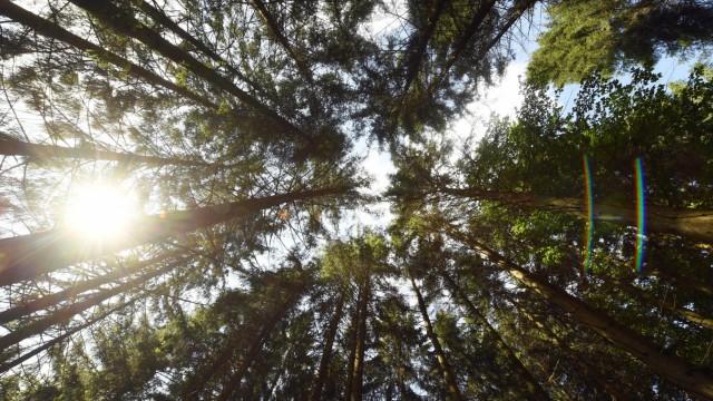 Wald in Baden-Württemberg