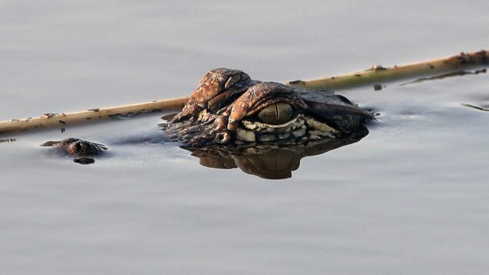 Polizei in Tennessee warnt vor Alligatoren im Drogenrausch