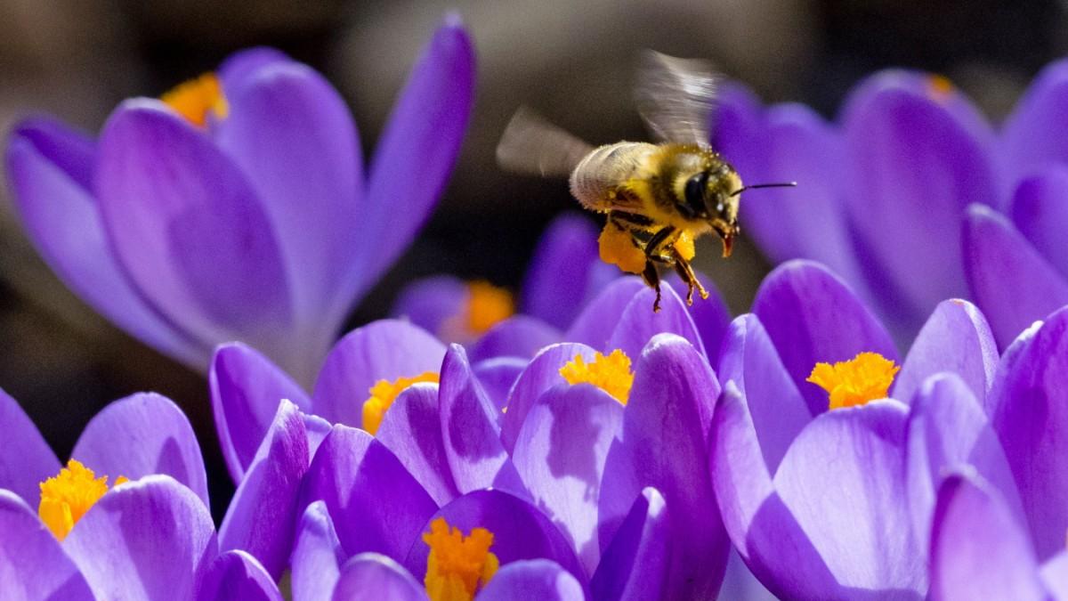 Alles für die Bienen? Von wegen!