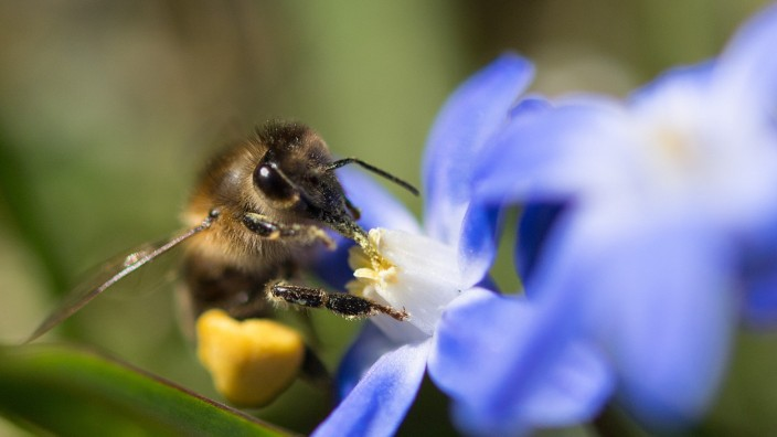 """Bayern: Der Landtag beschließt das Volksbegehren zur Artenvielfalt """"Rettet die Bienen"""""""