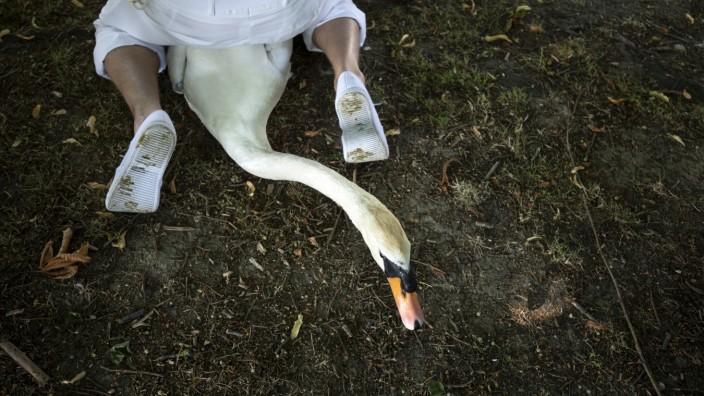 ***BESTPIX*** Swan Upping Begins On The River Thames