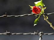 Auschwitz-Gefangene: Flaschenpost aus der Hölle, Reuters