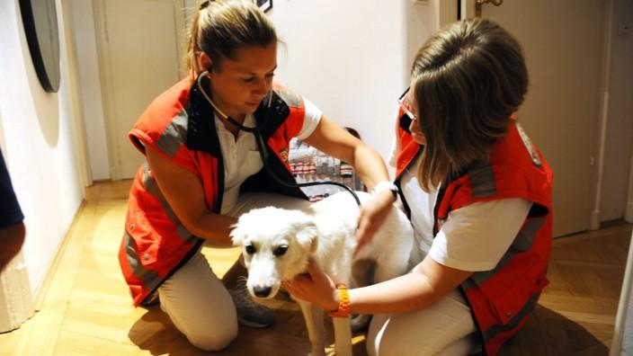 """Hündin """"Pippa"""" leidet an Juckreiz, wahrscheinlich eine Allergie, diagnostizieren die Mitarbeiterinnen der Tierrettung."""
