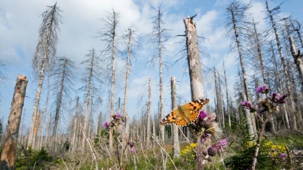 Waldschäden in Deutschland