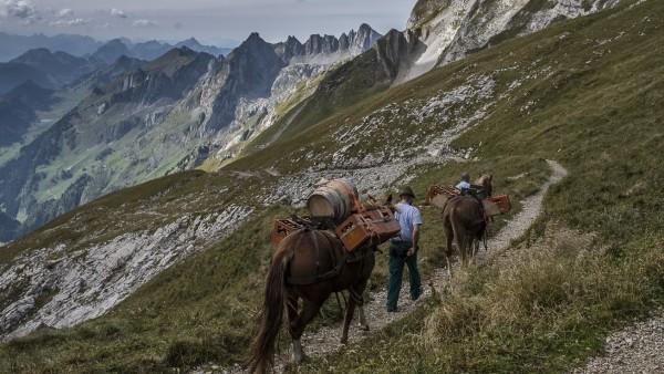 Pferde tragen Whiskyfässer den Berg hinauf.