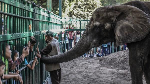Keine afrikanischen Elefanten mehr für Zoos und Zirkusse